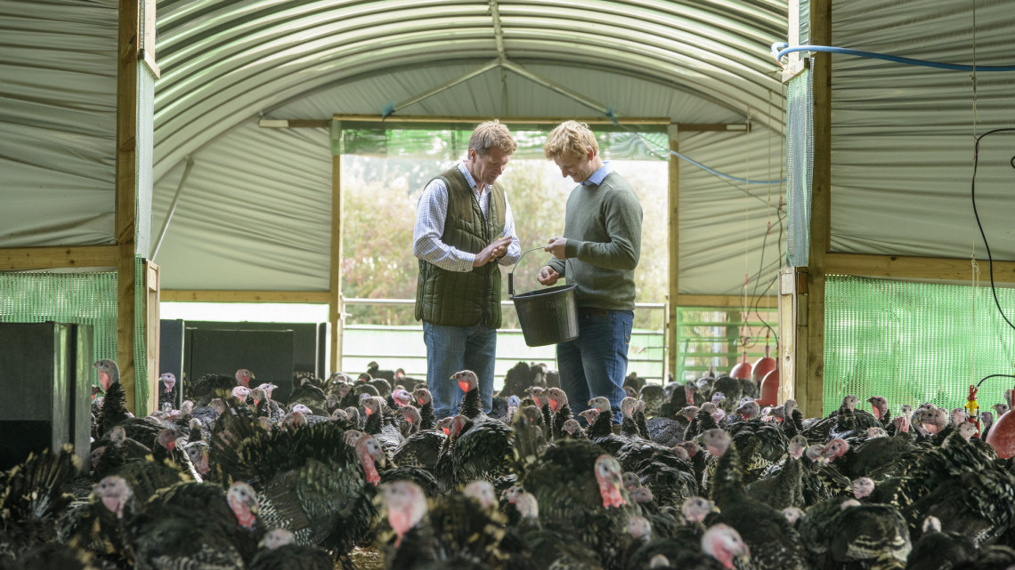 Több mint 11 ezer baromfit kellett leölni: ebben a megyében tarolt a madárinfluenza