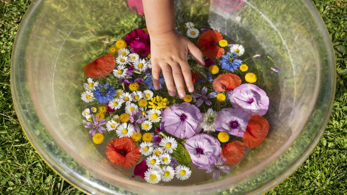 Meglepő dolog derült ki ezekről a tavaszi virágokról: ingyen jár velük az egészség