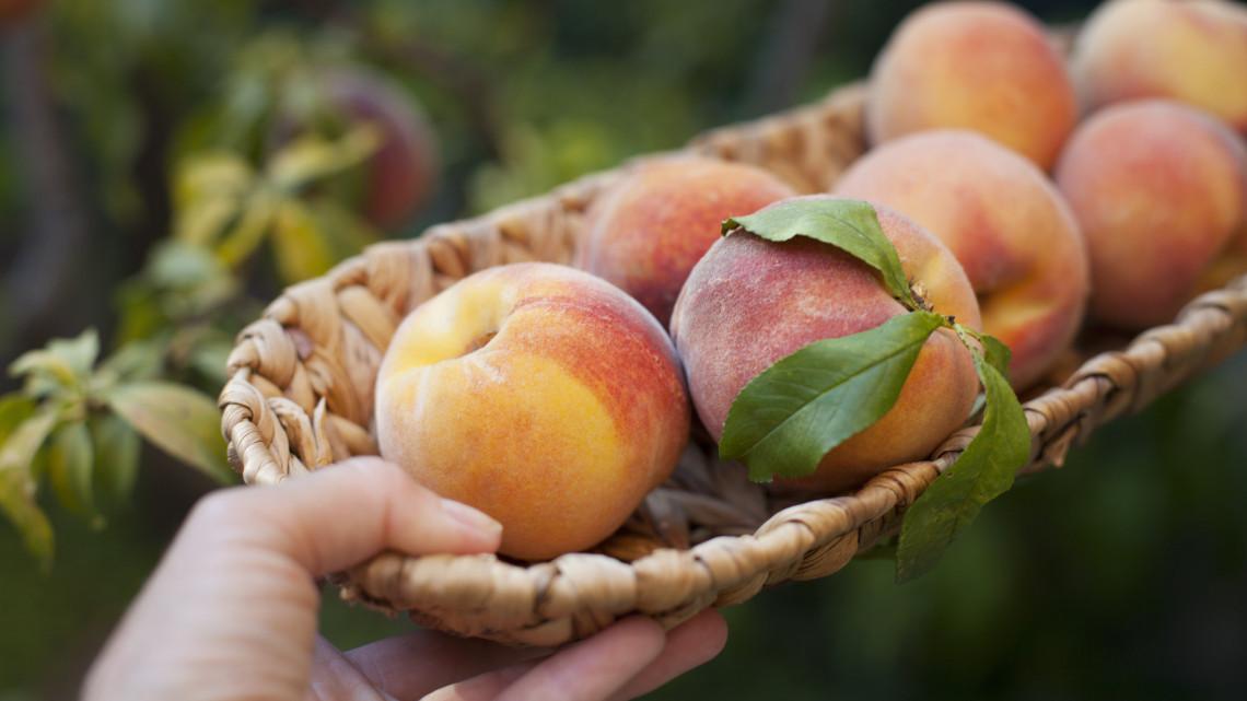 Csak a fagy el ne vigye: uniós oltalmat kapott ez a kiváló minőségű magyar gyümölcs