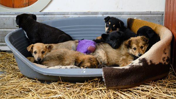 Így csökkenetik a kóbor kutyák számát: nagyszabású ivartalanítási program indult