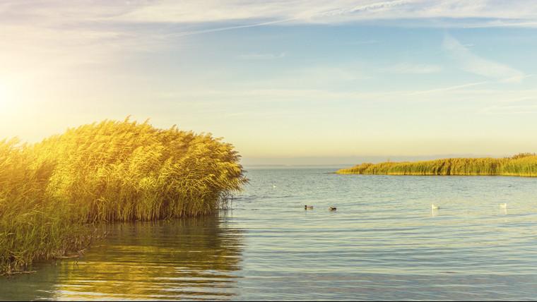 Váratlan felfedezés: különösen ritka algafajra bukkantak a hazai állóvizekben