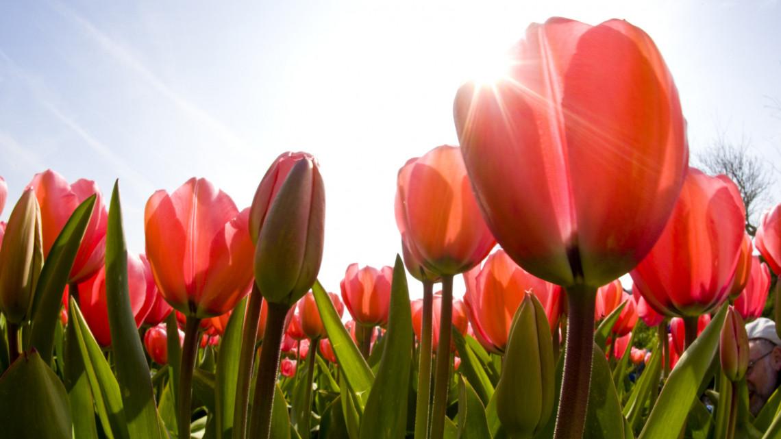 Fillérekért veheted meg a szezon virágait: mutatjuk, hol keresd