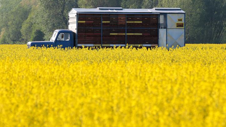 Betett az időjárás a termesztőknek: ebből a mézfajtából lehet hiány a boltok polcain