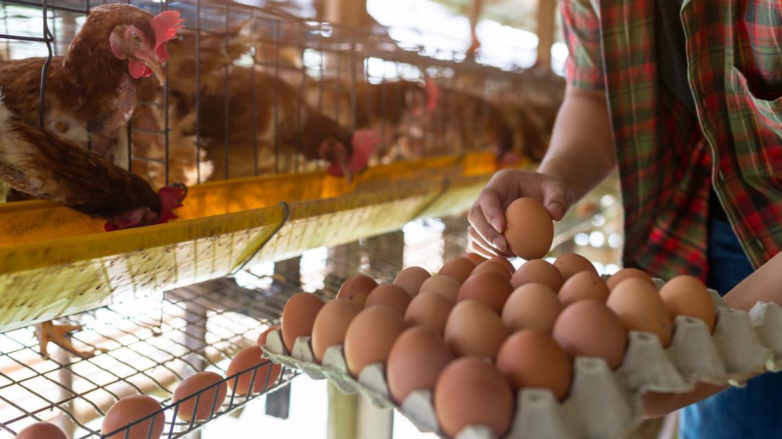 Ezek a legnagyobb tévhitek a tojásról: lerántjuk a leplet a magyarok nagy kedvencéről
