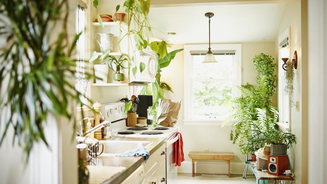 Főzni is kellemesebb így: ezek a szobanövények a konyhában is virulnak