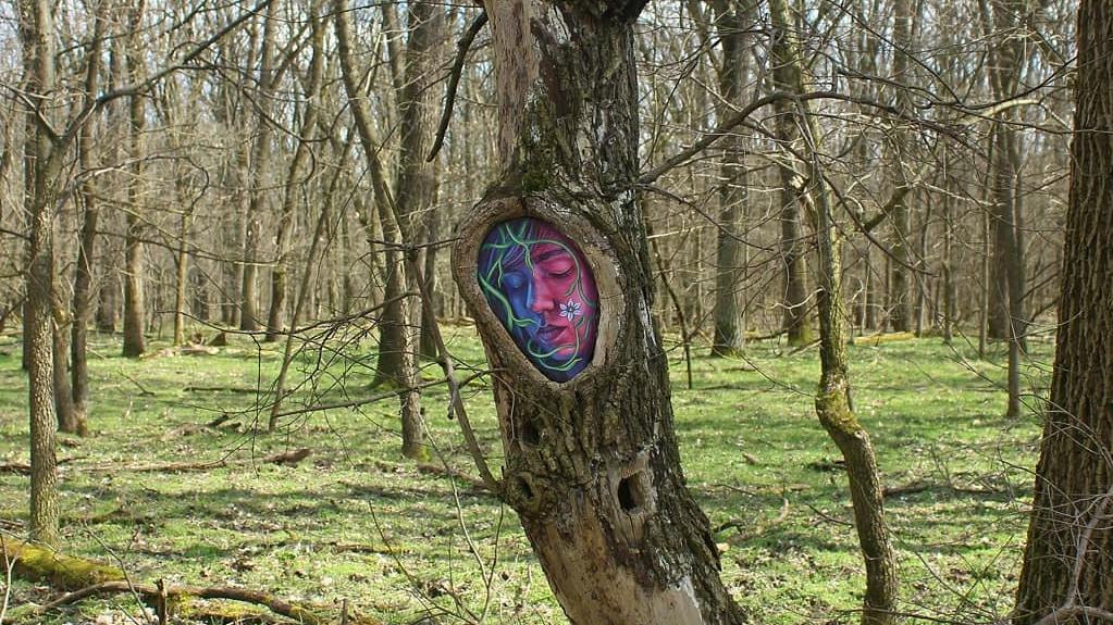 Ilyet még nem láttál: lenyűgöző, ami a debreceni erdőben történt a fákkal