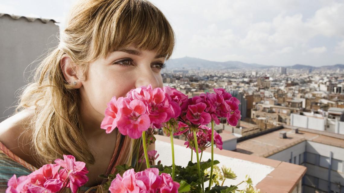 Íme a titok: így lehet egész nyáron át pompásan virágzó muskátlid