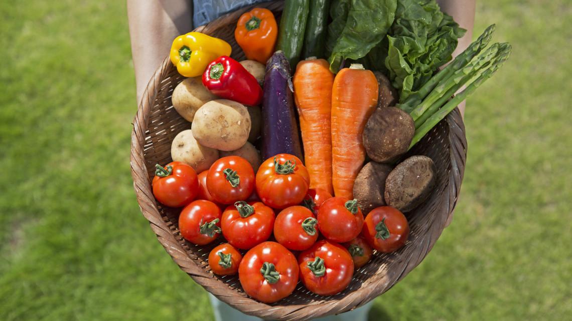 """Hódító útra lépett a hartai """"Farmville"""": egyre többen kapnak rá a vidéki zöldségek ízére"""