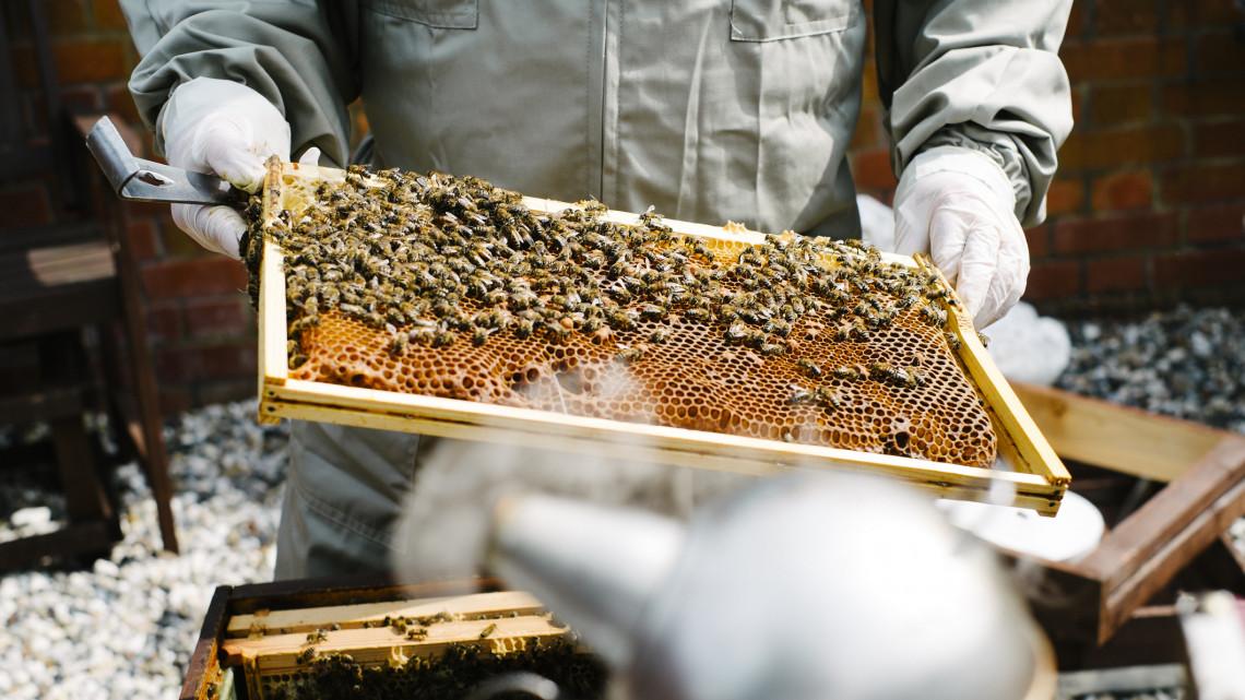 Mentőöv a magyar méhészeknek: akár 14 milliós támogatást is kaphat, aki ezt teszi