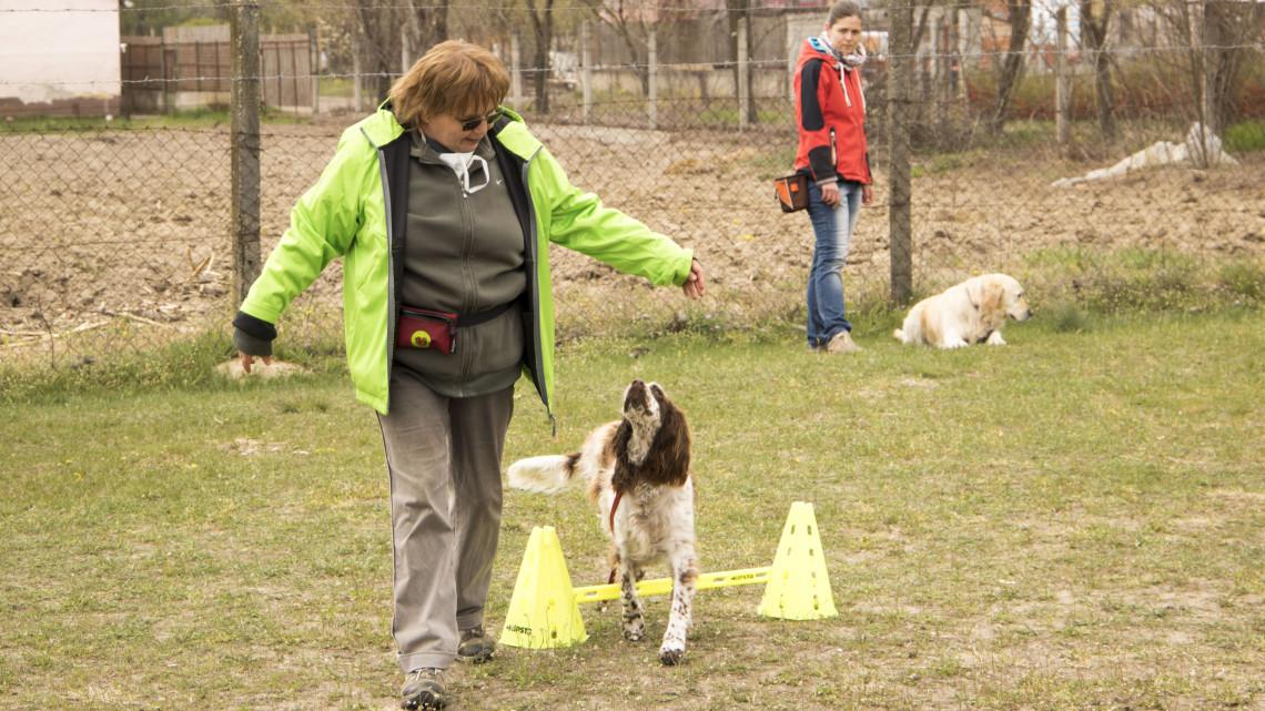 Elárulta a kiképző, milyen fajtákból lesz a legjobb terápiás kutya