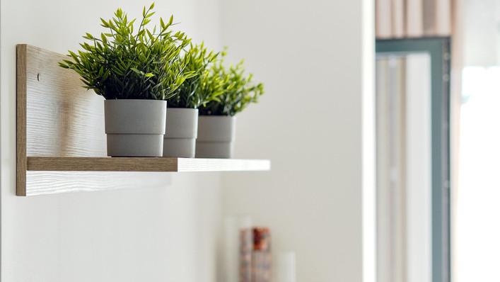 Sötét a lakás, pusztulnak a növények? Felesleges pénzkidobás helyett válaszd ezt a megoldást!