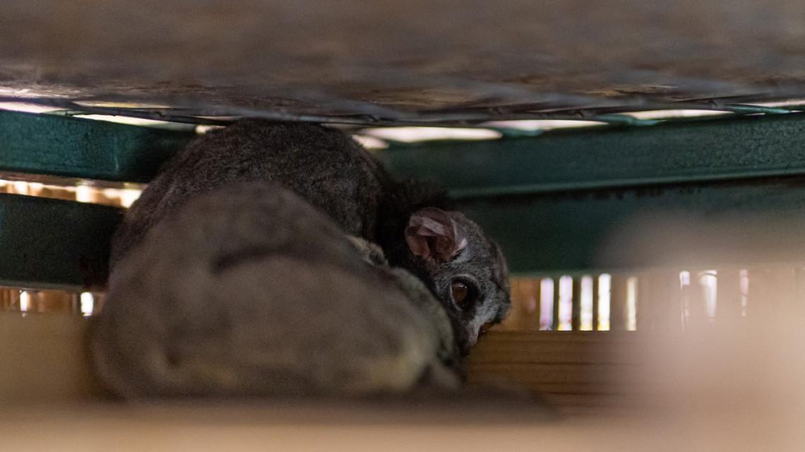 Korábban soha nem látható fajjal bővült a Debreceni Állatkert: mutatjuk az új jövevényeket
