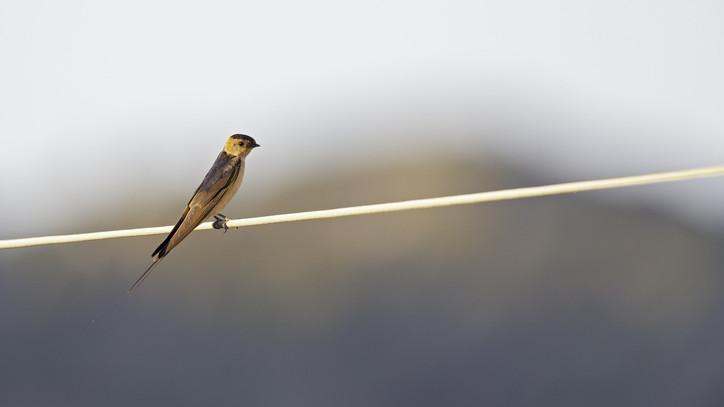 Ritka fajt figyeltek meg a madárvédők: mutatjuk, hol bukkant fel a különleges madár