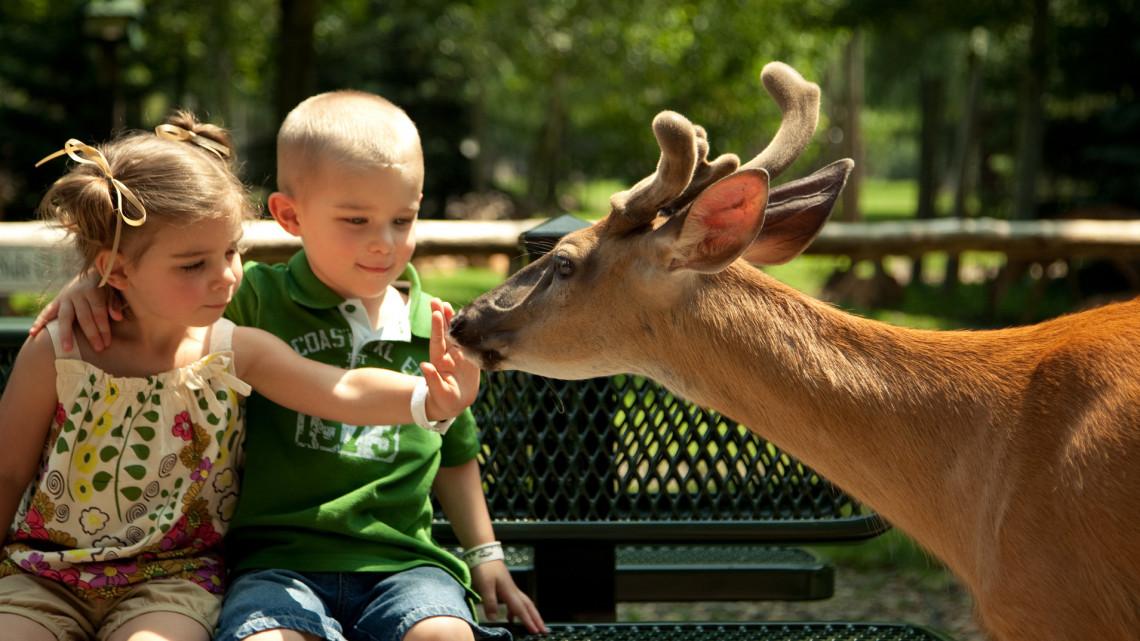 Nem lehet felhőtlen az öröm: tovább küszködnek a vidéki állatkertek