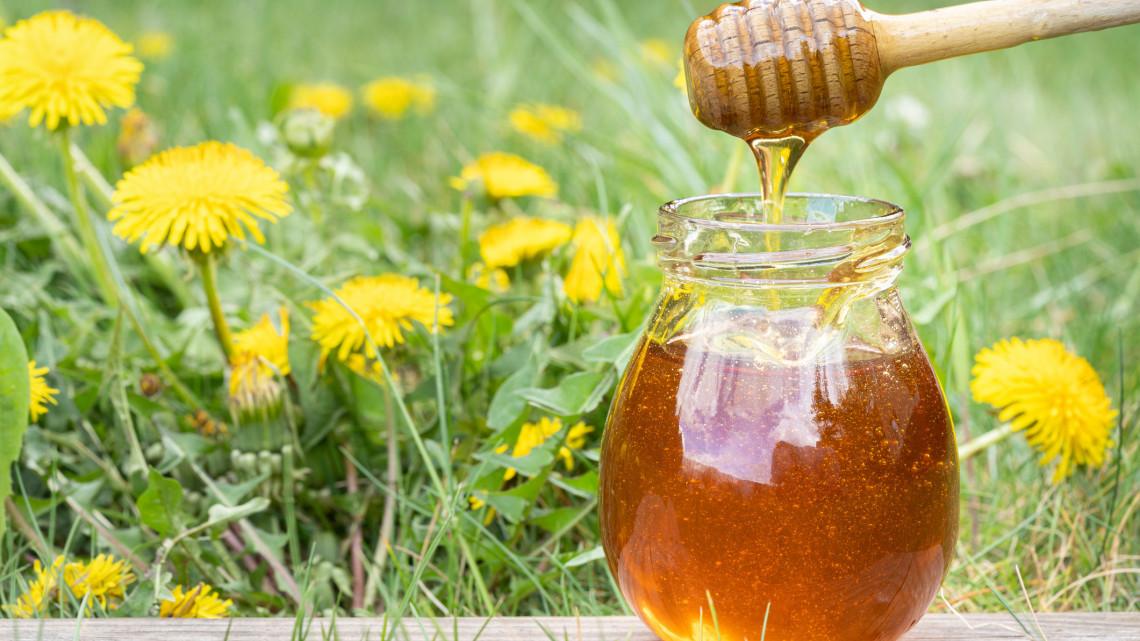 Ingyen virágzik most a pitypang: őrült finom hamis mézet készíthetsz belőle!