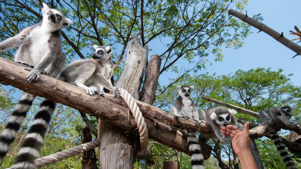 Két ikerpár született: ők a játékos jövevények ebben a vidéki állatkertben