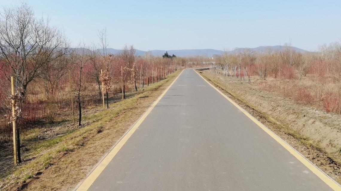 Dicséretes megmozdulás a zöld környezetért: fákkal szegélyezték ezt az útszakaszt