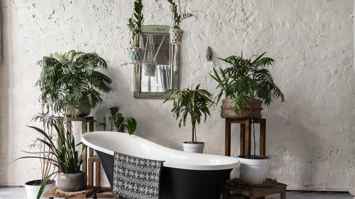Hihetetlen túlélők: még a fürdőben sem pusztul el ez a nyolc szobanövény