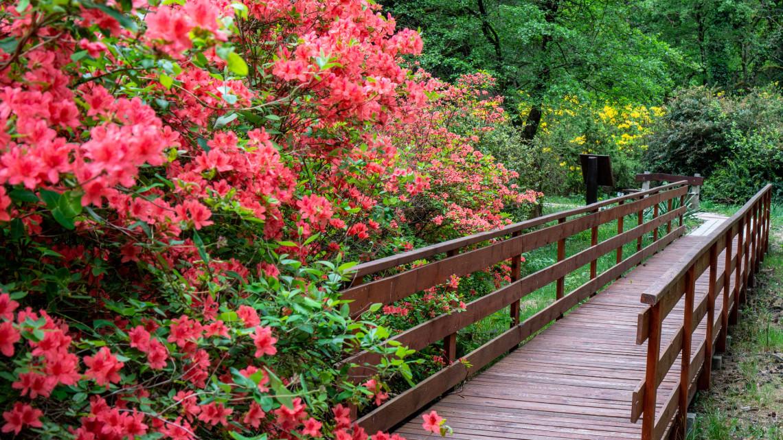 Bakancslista: 5 káprázatosan szép botanikus kert, amit kár lenne májusban kihagyni