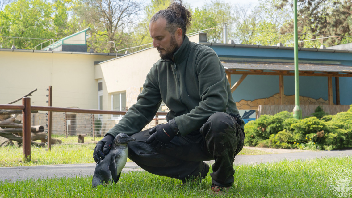 Kiakadt a cukiságmérő: az állatkert új jövevénye mindenkit az uszonya köré csavar