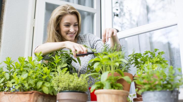 Kezdődhet a májusi veteményezés: íme 5 növény, ami a szeszélyes időjárásnak is ellenáll