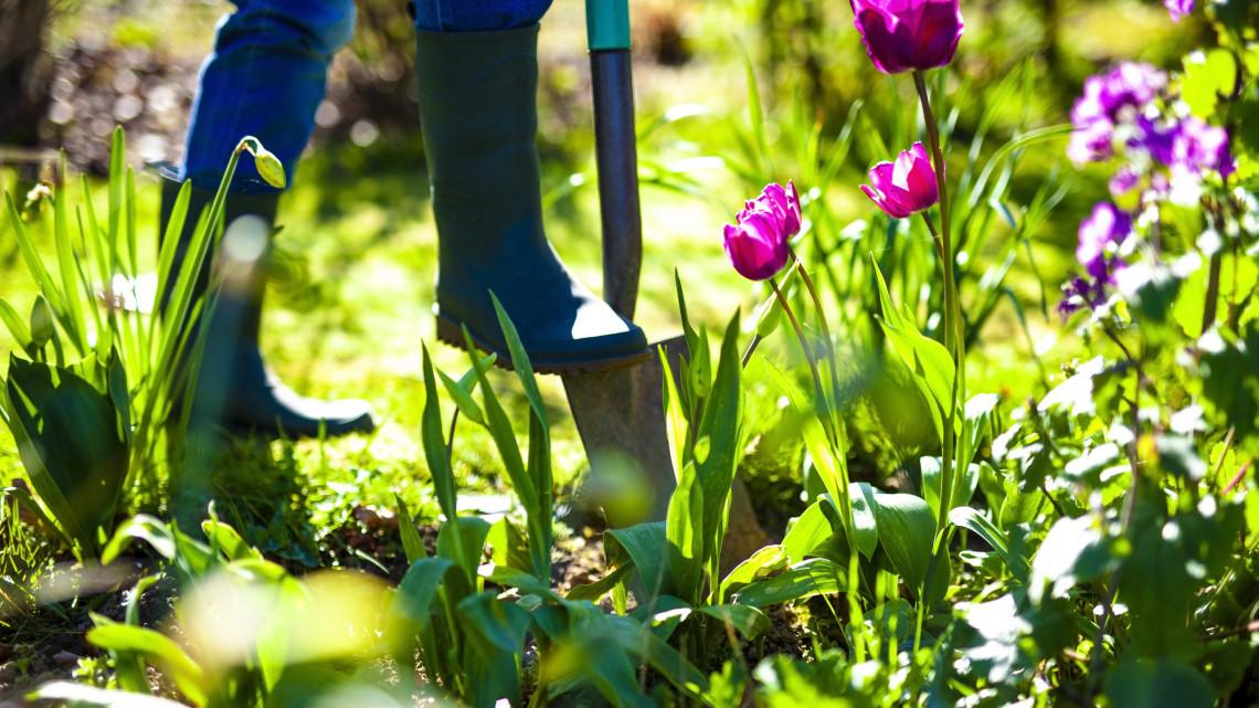 Ezek a legfontosabb kerti munkák májusban: itt a 8 pontos feladatlista