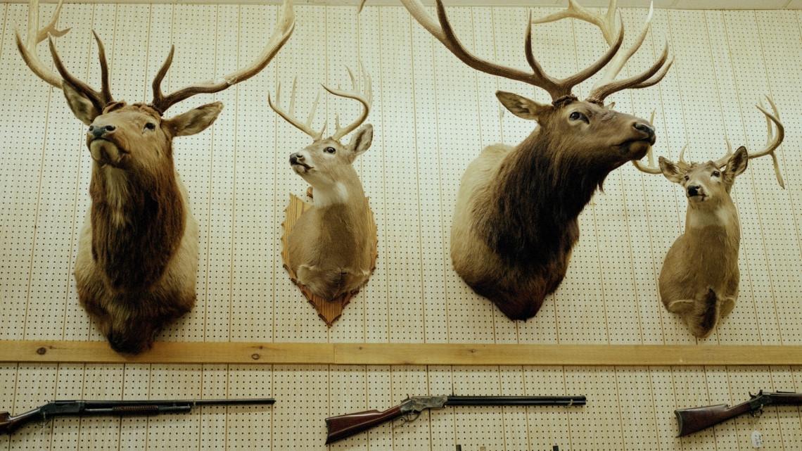 Nagyot zuhant a vadhús ára a piacokon: vajon mit hoz a 2021-es vadászati idény?