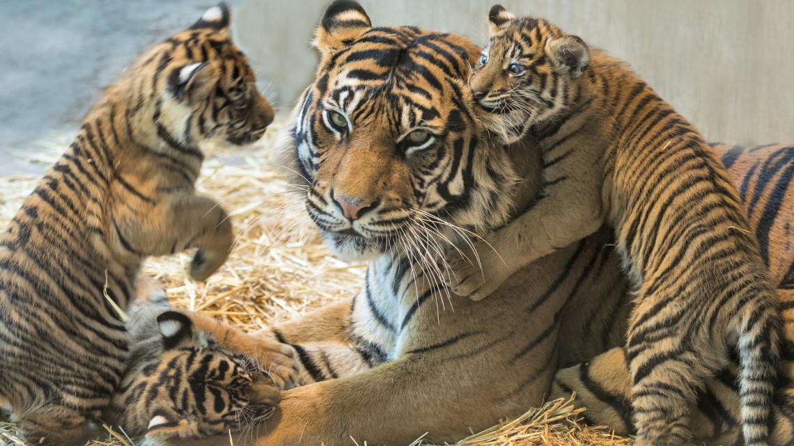 Eszméletlen, mennyire cukik: három kölyök is született ebben a vidéki állatkertben