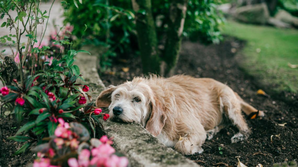 Nagyon nem mindegy, mit ültetünk a kertbe: íme a lista kutyás és cicás gazdiknak