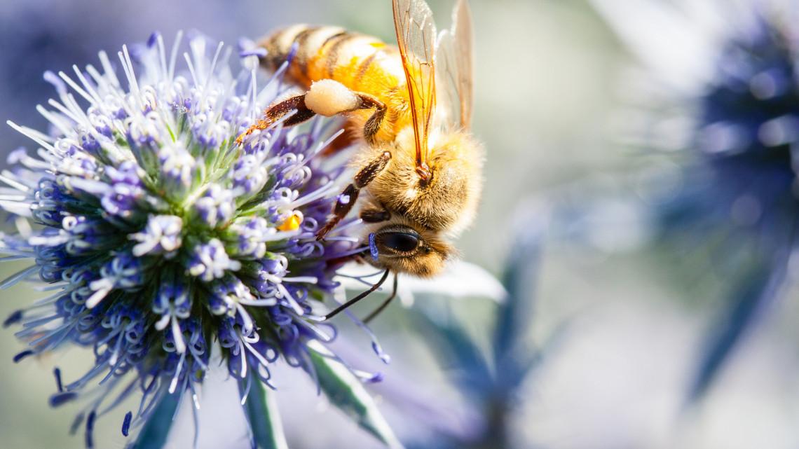 Ezért olyan olcsó az ukrán méz a piacokon: kell tőle félnünk?