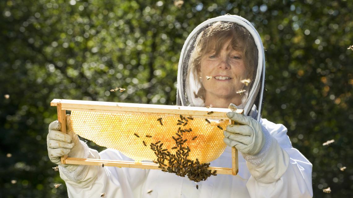 Kezdődik a mézkampány: ismeretterjesztő program indult a méhek védelme érdekében