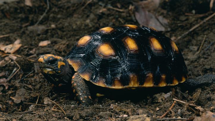 Új lakókkal bővült a Szegedi Vadaspark: szenes teknős kelt ki
