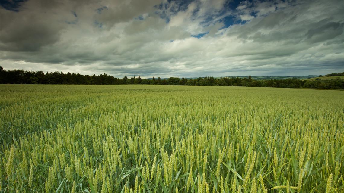 Jól haladnak a vetési munkák: így alakították az esőzések a várható termést