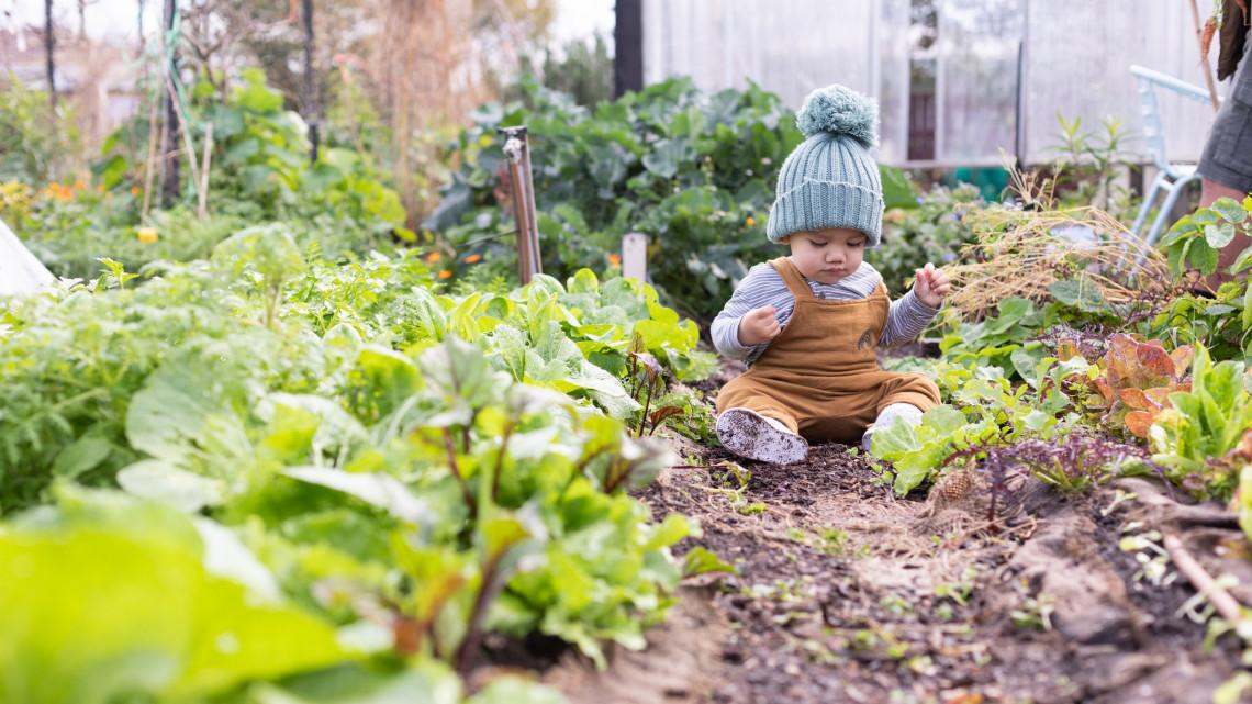Rengeteget spórolhatsz a saját kerttel: mutatjuk, hogyan