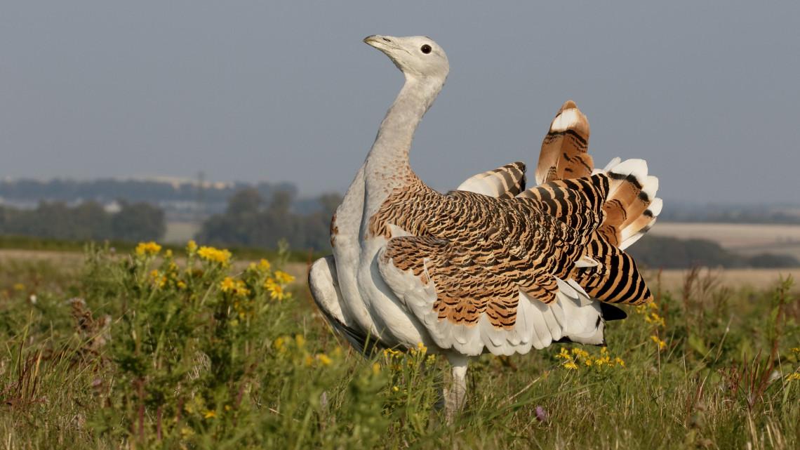 Nem fogod elhinni, mit ünneplünk ma: így vigyázunk itthon a biológiai sokféleségre