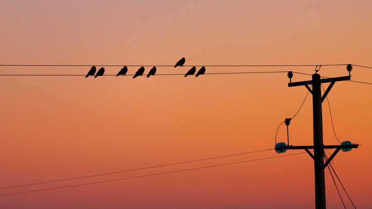 Mesés látványt ígérnek a madárfigyelő napok: országszerte várják az érdeklődőket