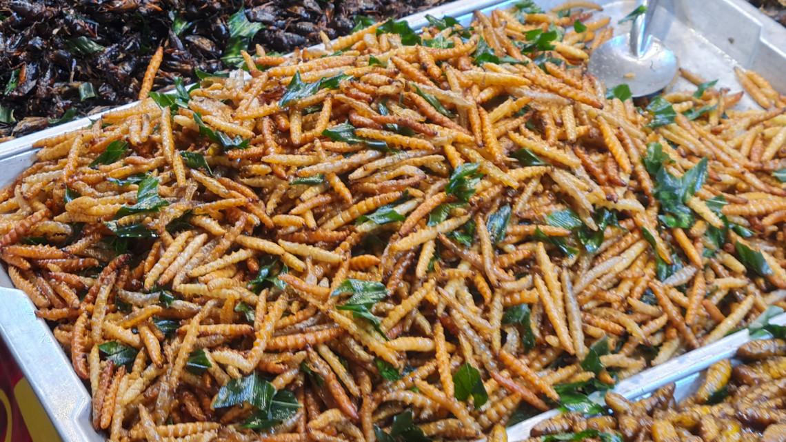 Sokkoló hír: felkerülhet a hazai étlapra is a lisztkukac?