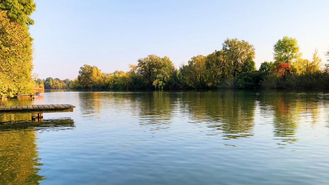 Elképesztő jelenség Vácrátóton: káprázatos növények lepték el a tavat