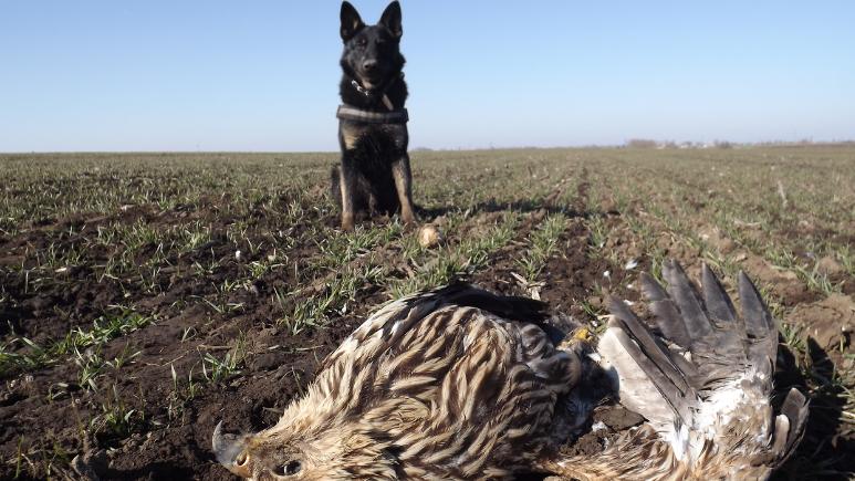 Nyugdíjba vonul Falco, a madarak segítője: mérgezéses bűneseteket derített fel a derék kutya