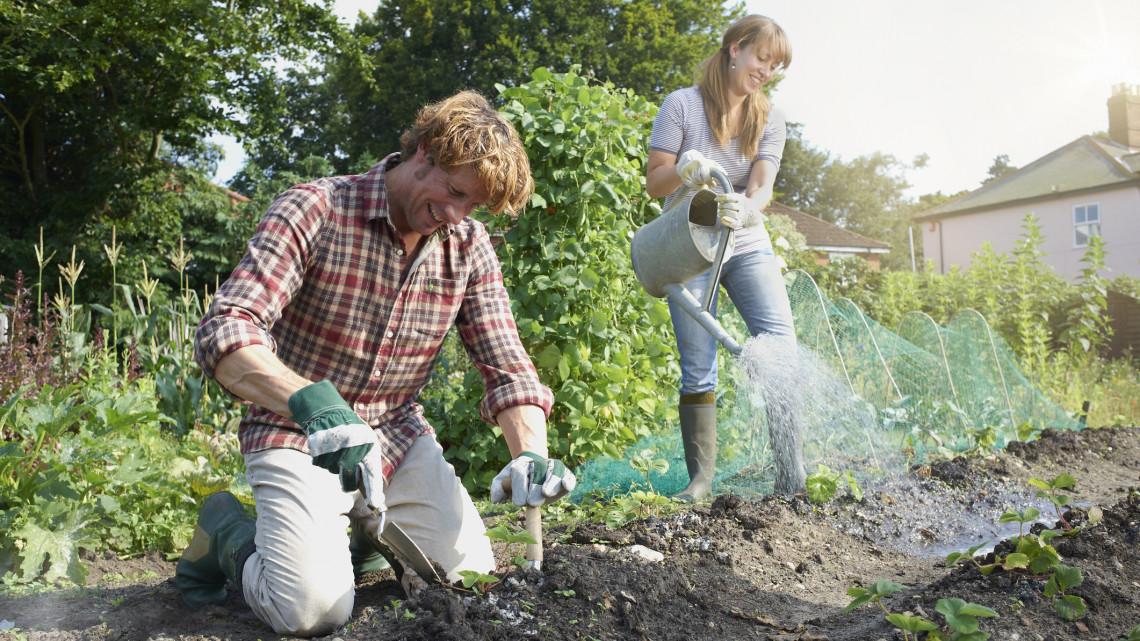 Ezek a legfontosabb kerti munkák júniusban: itt a 9 pontos feladatlista