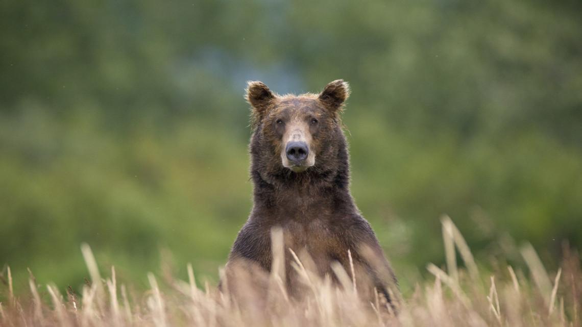 Medve járt a Börzsönyben: fotókon mutatjuk a bizonyítékot