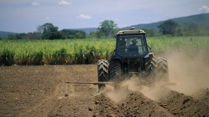 Jó hír a termesztőknek: kedvezőbbé váltak az aranykalászos gazdaképzés feltételei