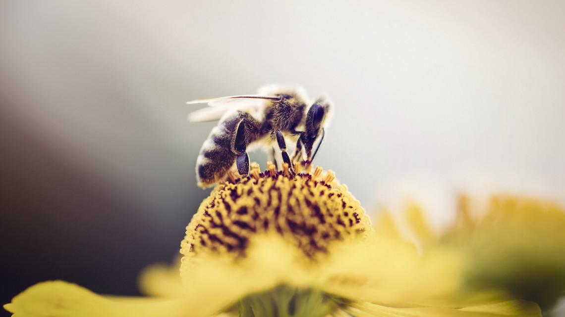 Zajos sikert aratott a fiatal méhész: interaktív térképe segítheti a méheket