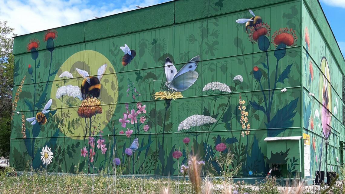 Megindult a beporzó hadművelet: így tesznek a méhekért a vidéki nagyvárosban