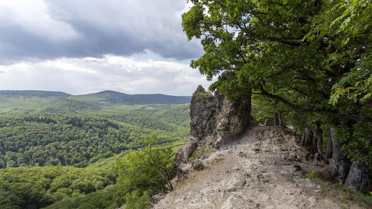 Sokat tehetnek a klímaváltozás ellen az erdőgazdaságok: mutatjuk, hogyan