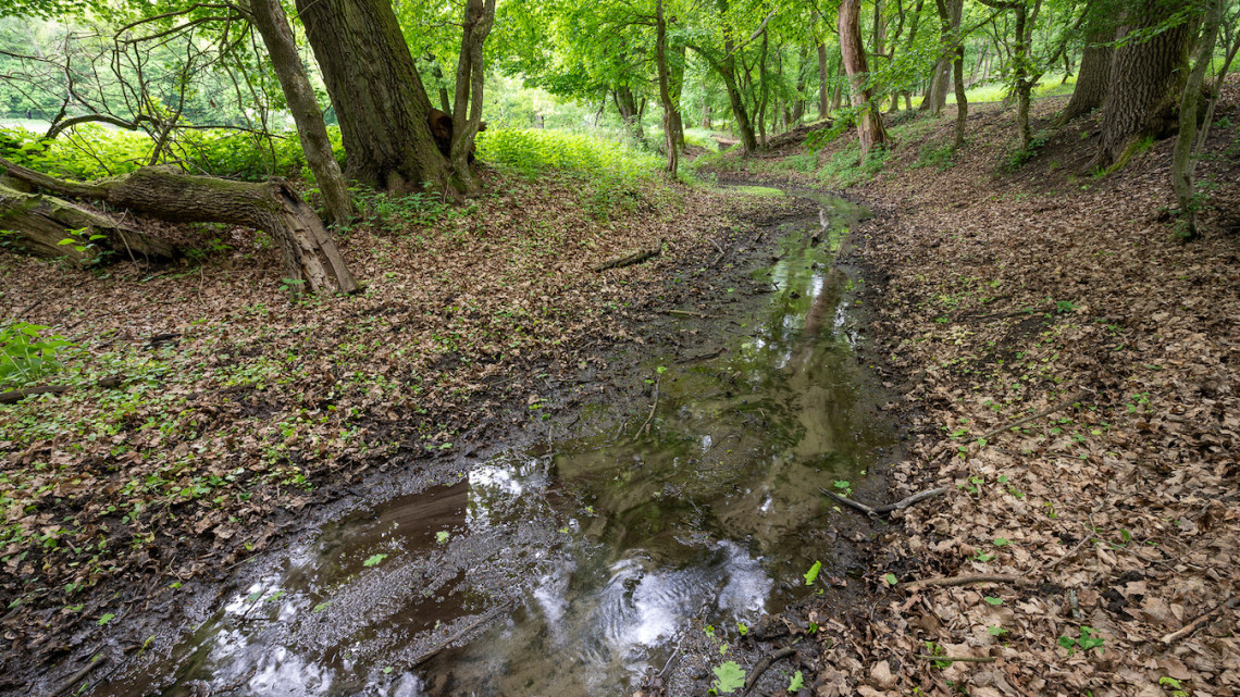 Így menthetnek meg a katasztrófától az erdők: a Pilisben tesznek a klímaváltozás ellen
