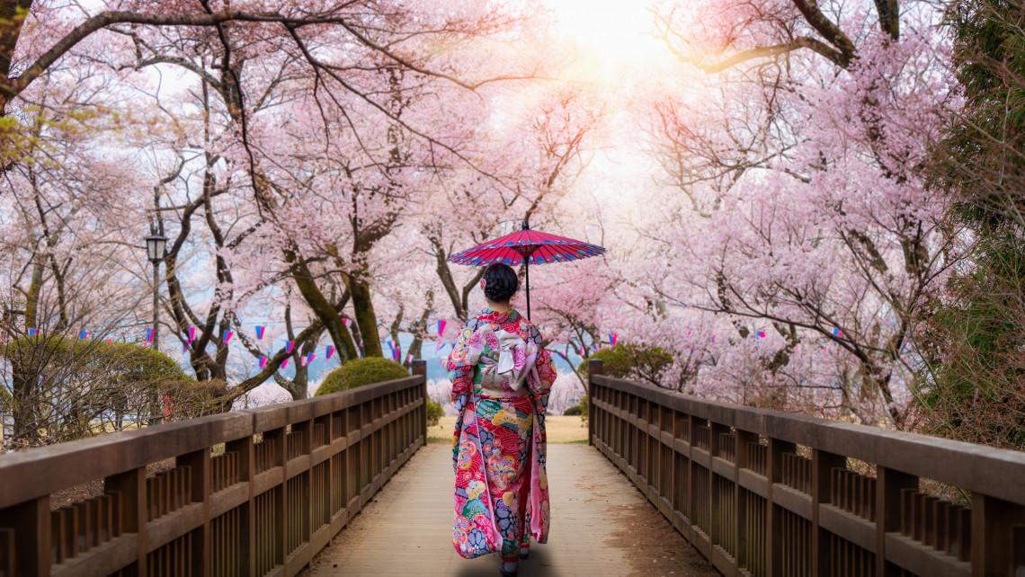 A japán cseresznyevirág szimbolikája: Mi a cseresznyevirág jelentése, a cseresznyevirág tetoválás jelentése?