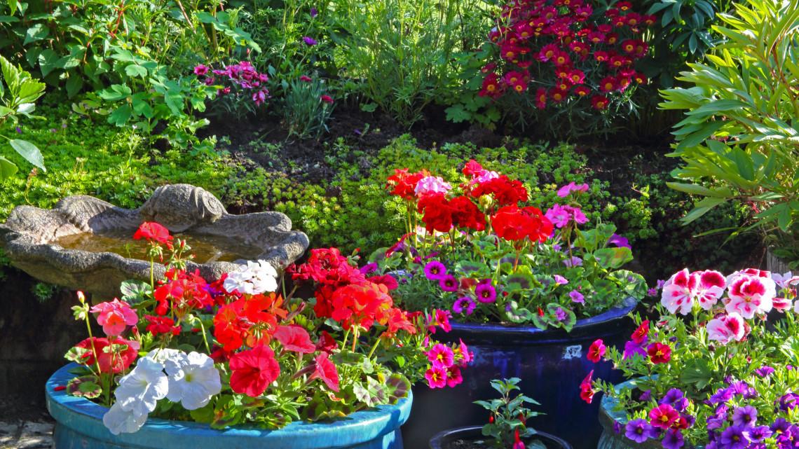 Balkonunk és kertünk csodás dísze lehet: így hozhatjuk ki a legtöbbet a muskátliból