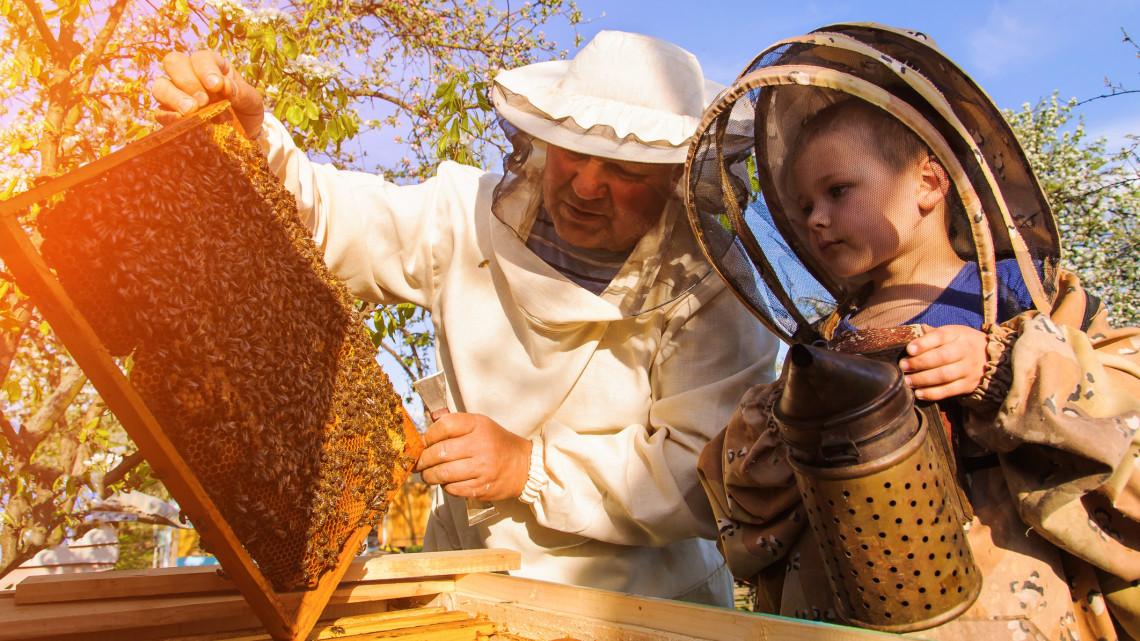 Útnak indult a vidéki méhcsalád: igazán extra helyre költöztetik őket