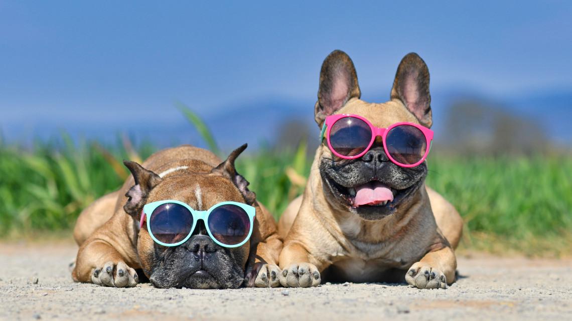 Kutyameleg van: így védjük meg házi kedvenceinket a hőgutától